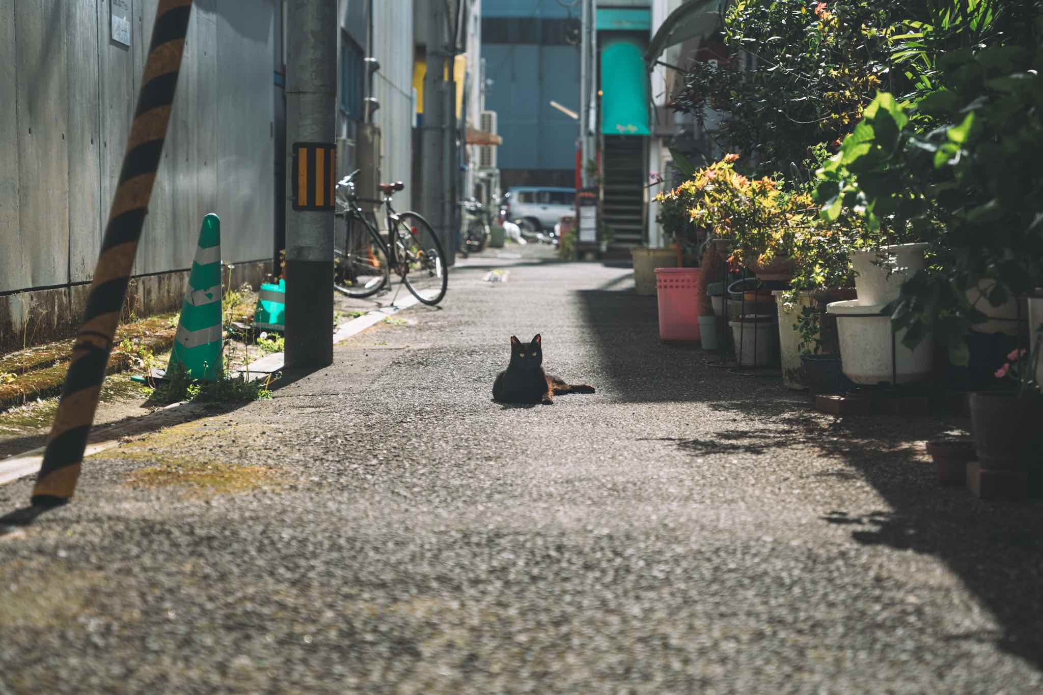 【高知日帰り旅】観光にも来たいし、住みたくもなる雰囲気が良い